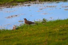 Vogel durch das Wasser im Park stockfotos