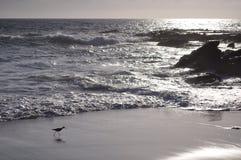 Vogel durch die Felsen Lizenzfreie Stockbilder