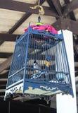 Vogel in een Kooi Royalty-vrije Stock Fotografie