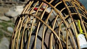 Vogel in een kooi wordt gehouden die stock video