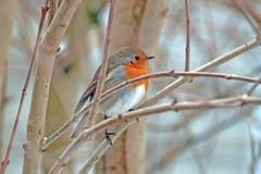 Vogel in einem Baum im Winter Stockfotos