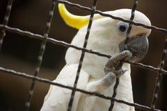 Vogel in einem Käfig. Lizenzfreie Stockfotografie