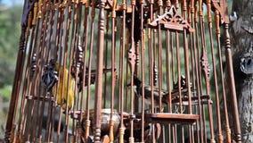 Vogel in einem Käfig stock footage