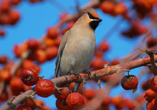 Vogel in einem schönen Garten Lizenzfreie Stockfotografie