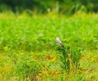 Vogel in einer Wiese Stockfotografie