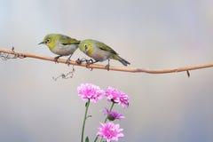Vogel en chrysant stock fotografie