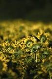 Vogel en gele bloemen stock afbeelding