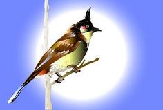 Vogel en natuurlijk Royalty-vrije Stock Foto's