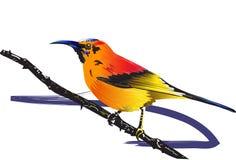 Vogel en natuurlijk Stock Afbeelding