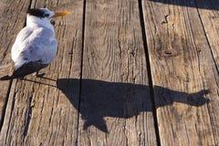 Vogel en Schaduw Royalty-vrije Stock Afbeelding