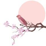 Vogel en tak van kersenboom Royalty-vrije Stock Afbeeldingen