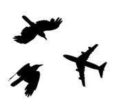 Vogel en vliegtuig die zwarte silhouetsamenstelling vliegen Royalty-vrije Stock Afbeeldingen