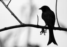 Vogel en zijn reptiel Royalty-vrije Stock Foto