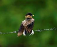 Vogel erhielt im Regen naß stockbild
