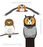 Vogel Europa Owl Set Cartoon Vector Illustration vector illustratie