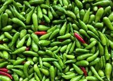 vogel eye& x27; s Spaanse pepers stock foto's