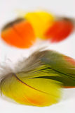 Vogel-Federn Stockfoto