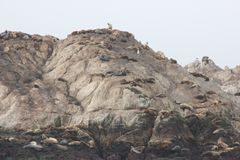 Vogel-Felsen, Pebble Beach, 17 Meilen-Antrieb, Kalifornien, USA Lizenzfreies Stockbild