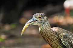Vogel-Fischen Stockfotos