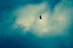 Vogel-Fliegen in Dunkelheit bewölktem Himmel Lizenzfreies Stockfoto