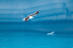 Vogel-Fliegen unter den Eisbergen Stockfotografie
