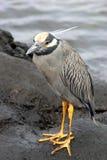 Vogel, Galapagos Stockfotos