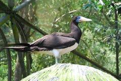 Vogel am Gefangenen Lizenzfreie Stockfotografie