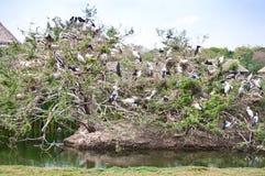 Vogel-Gemeinschaft Lizenzfreies Stockbild