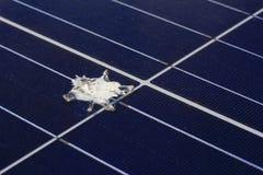Vogel geschissen auf Sonnenkollektor-Oberfläche lizenzfreie stockbilder