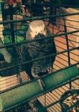 Vogel in gevangenschap stock foto