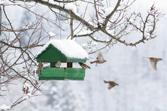 Vogel-Haus lizenzfreies stockfoto