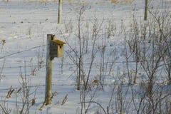 Vogel-Haus auf dem Winter-Grasland Stockfoto