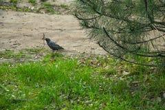 Vogel in het de lente warme bloeiende park royalty-vrije stock afbeelding
