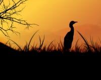 Vogel in het Gras Royalty-vrije Stock Fotografie