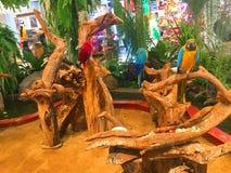 Vogel het hangen op een boomtak op achtergrond stock fotografie
