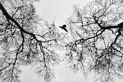 Vogel in het midden van bomen Royalty-vrije Stock Foto's