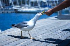 Vogel in het park van Barcelona Spanje Stock Afbeelding