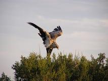 vogel het uitrekken zich vleugels Stock Afbeeldingen
