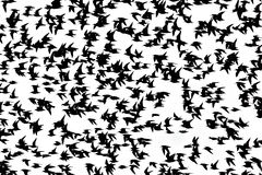 Vogel het vliegen Royalty-vrije Stock Foto's