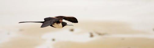 Vogel het vliegen Royalty-vrije Stock Foto