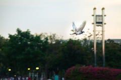 Vogel het vliegen Royalty-vrije Stock Fotografie