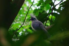 Vogel in het Wachten Royalty-vrije Stock Afbeeldingen