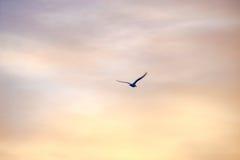 Vogel in het zonsonderganglicht Stock Foto's