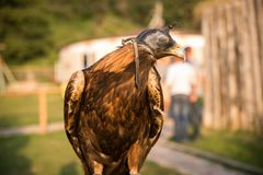 Vogel in hoed Royalty-vrije Stock Afbeelding