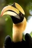 Vogel Hornbills Lizenzfreie Stockbilder