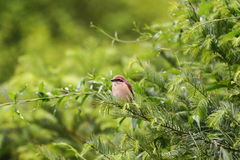 Vogel im Baum Stockfotografie
