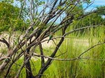 Vogel im Baum Lizenzfreies Stockbild