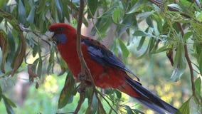 Vogel im Baum stock video