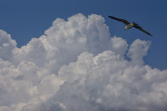 Vogel im blauen Himmel Lizenzfreies Stockfoto