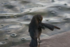 Vogel im Brunnen Stockfotografie